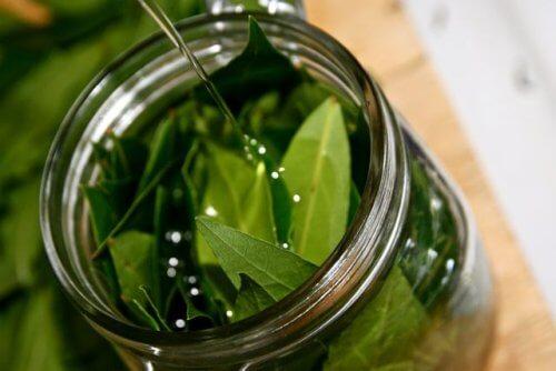 De utrolige fordele ved laurbærbladeolie