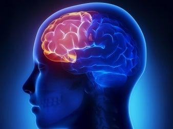 Forreste del af hjernen