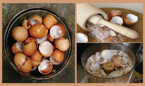 Opdag 6 interessante naturlige behandlinger med æggeskaller