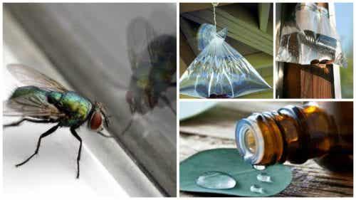 7 hjemmelavede løsninger mod fluer