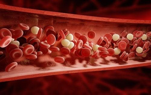 Roede og hvide blodceller