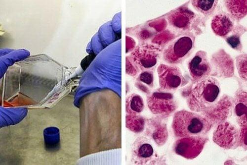 Mikroorganismer