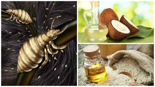 Naturlig behandling af lus: De fem bedste lusemidler