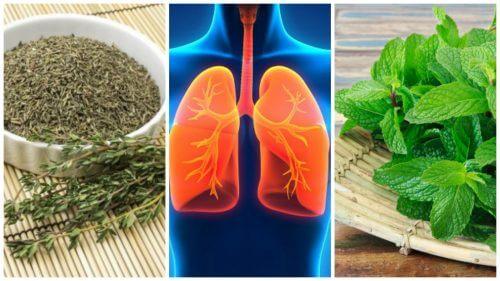 8 urter til at forbedre dine lungers sundhed