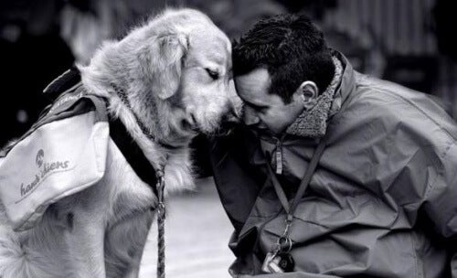 Sådan kan en hund behandle hjemve