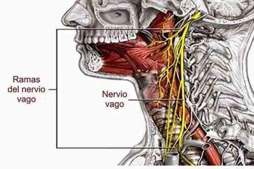 Væk din vagusnerve og få en sund krop gennem vejrtrækningen.