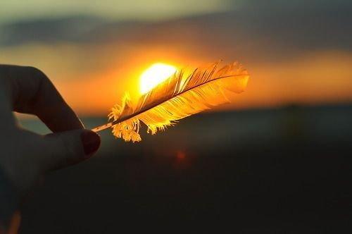 En fjer ved solopgang - lidenskaben taendes