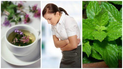 Sådan kan du lindre irritabel tarmsyndrom - 5 helbredende urter