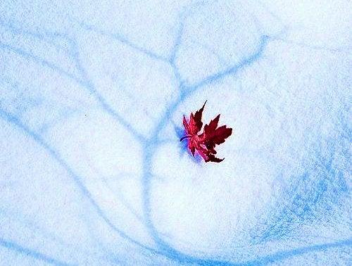 Blad ligger på sne