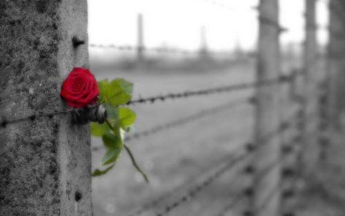 Forskellen mellem kærlighed og besættelse