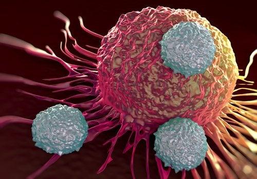 Kraeftceller