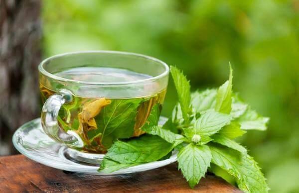 Kop med te med mint