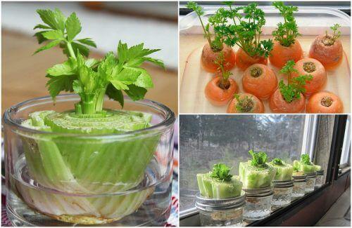 5 nemme grøntsager at gendyrke