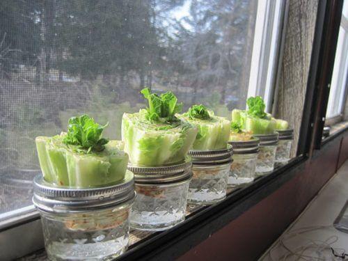 Salat i et vindue