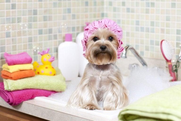 Hund med badehaette