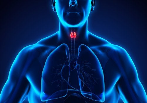 skjoldbruskkirtel - hvad er Hypothyroidisme