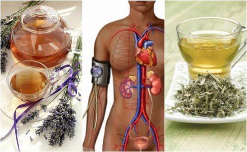 Sænk dit blodtryk med disse 5 urtemidler