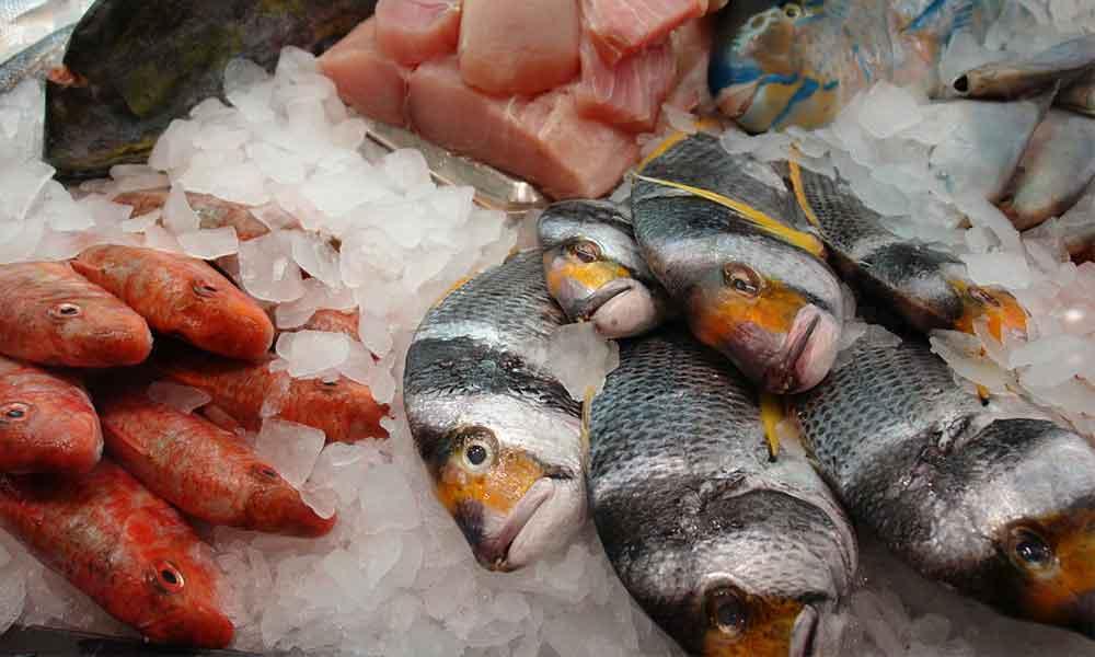 Forskellige typer fisk