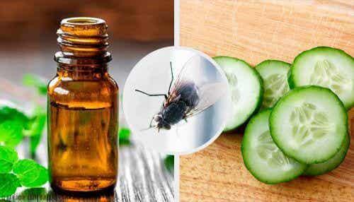 Hold fluer væk med disse 7 naturlige midler