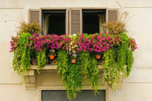 Planter på balkonen