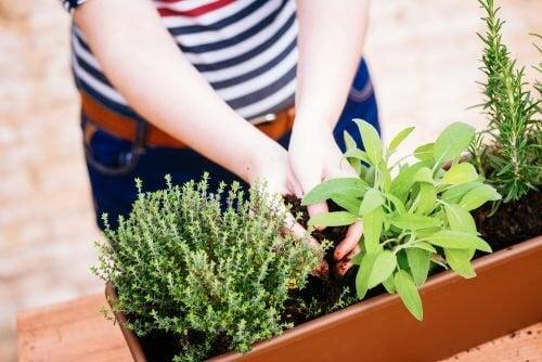 Miniature urtehave