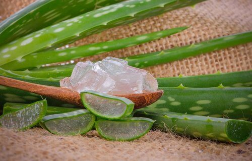 Aloe vera mod fnatmider