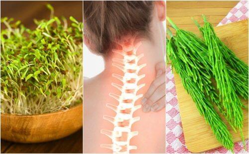 Syv planter der er gode for knoglerne