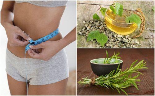 8 sunde urter der vil hjælpe på din vægtstabsdiæt