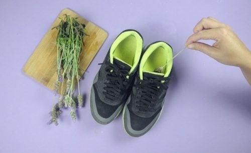 Lavendel mod ildelugtende sko
