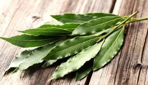 Eucalyptus, en stor hjælp