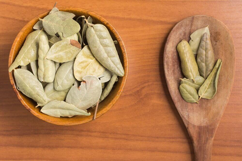Boldo blade - karminative urter