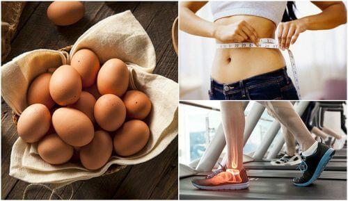 7 grunde til at det er en god ide at tilføje æg til din kost