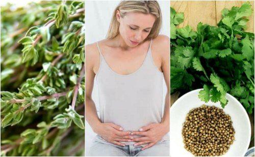 6 karminative urter, der hjælper dig med at slippe af med gas