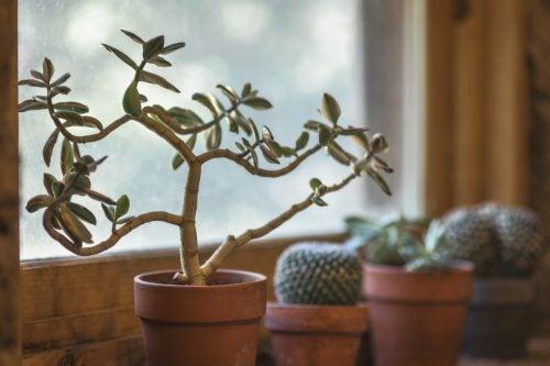 7 fordele ved at have en plante derhjemme