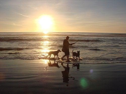 Mand gaar tur med hunde paa stranden
