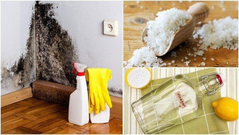 5 effektive måder at fjerne fugt i dit hjem