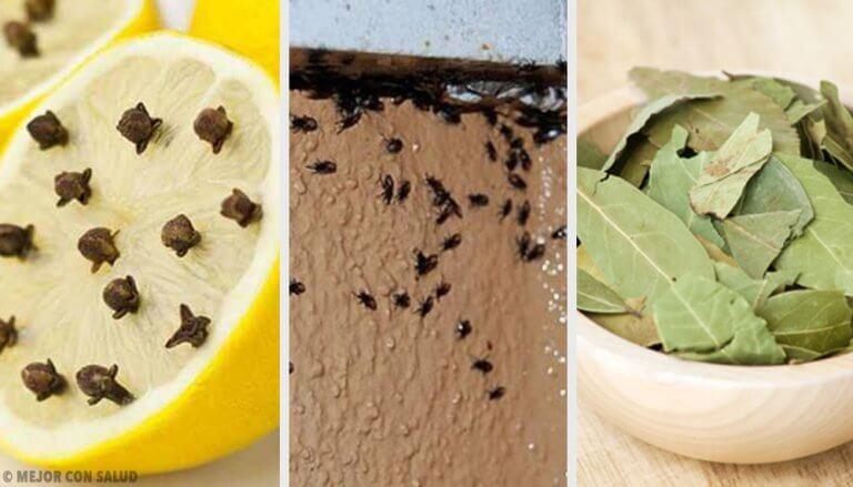 Slip af med irriterende insekter naturligt