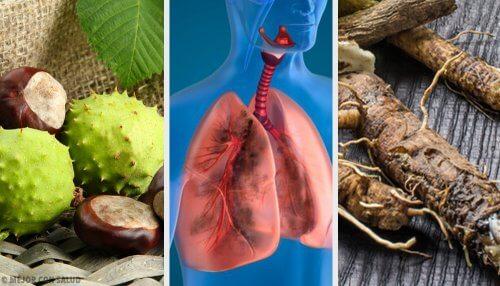 4 hjemmelavede midler til at styrke dine lunger