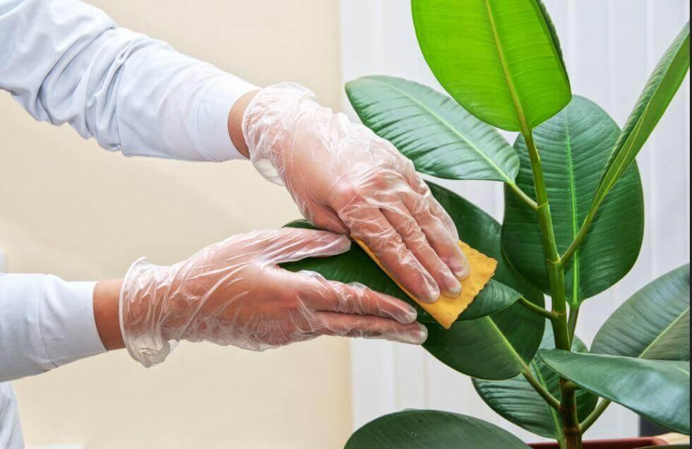 Sådan rengør du dine indendørs planter