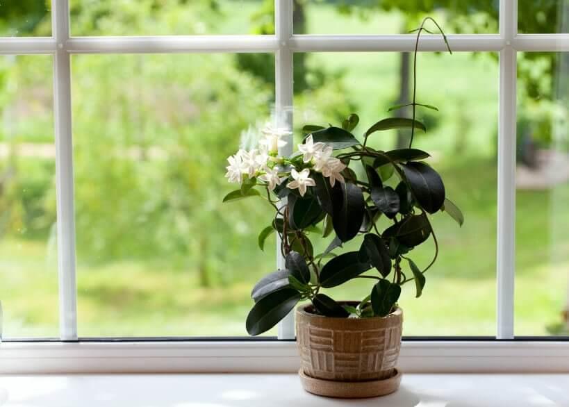 Rengør dine planter