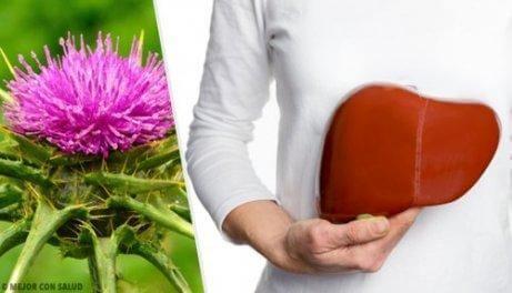 Forebyg fedtlever med disse utrolige naturlige midler