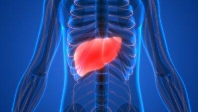 11 symptomer på leverforgiftning som du skal vide lige nu