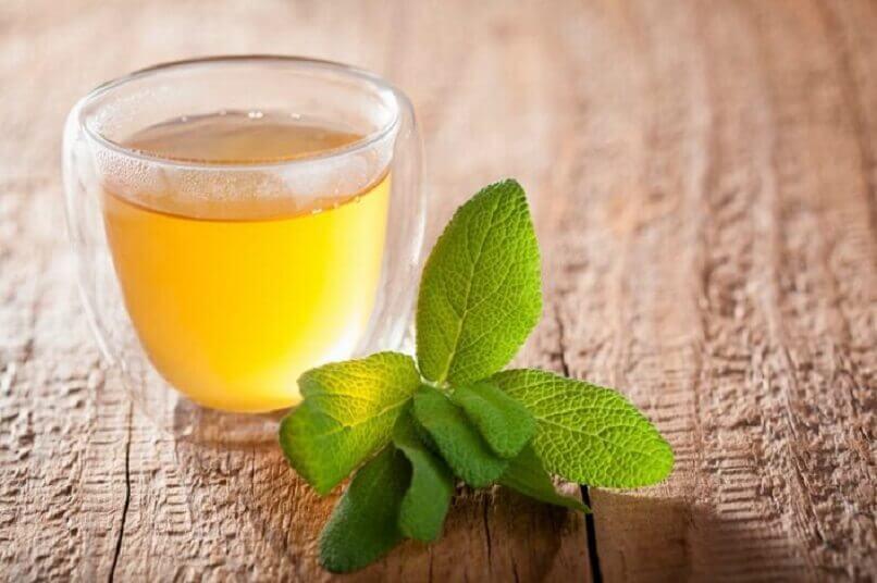 Te med citronmelisse