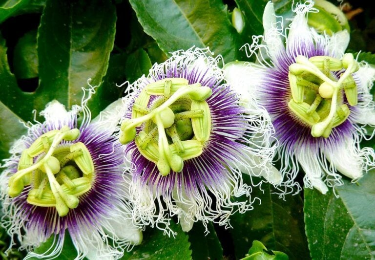 Smukke blomster - kontrollere din angst