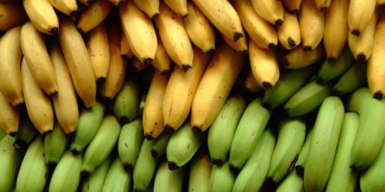 Tre ernæringsmæssige forskelle mellem bananer og madbananer