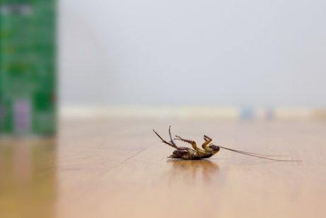 Fire tricks til at holde kakerlakker væk uden insekticider