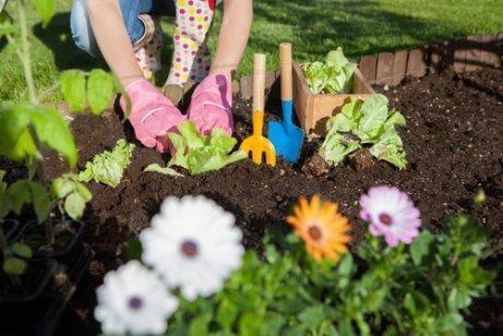 7 måder du kan bruge eddike i haven