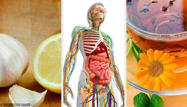 6 naturlige midler til at afgifte lymfesystemet