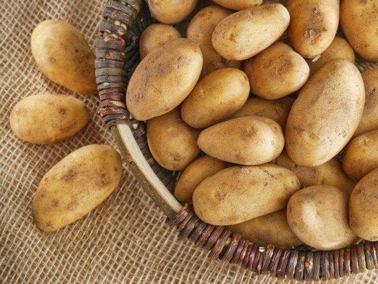 Kartofler - behandling af haemorider