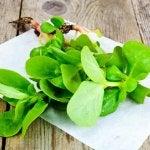 Grønne portulakplanter